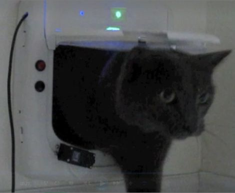 auto-locking-pet-door