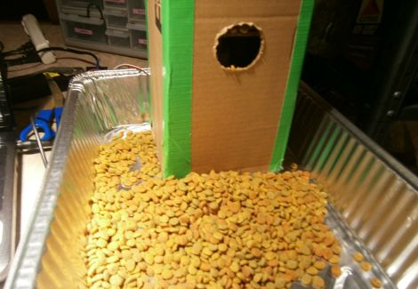 cheap-and-easy-cat-feeder