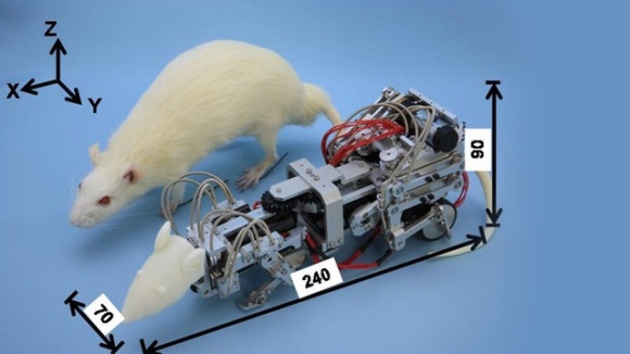 robotic-rat-torments-real-rats