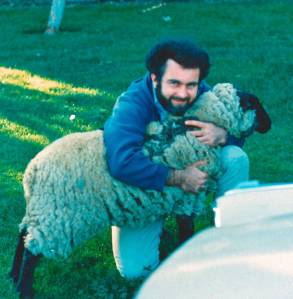 Widlar sheep