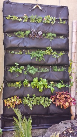 Wall-Mounted Hydroponic Garden