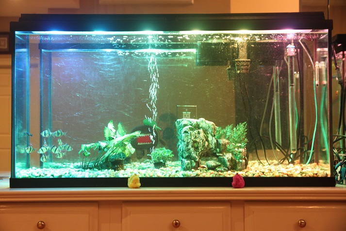 Aquarium with variable LEDs