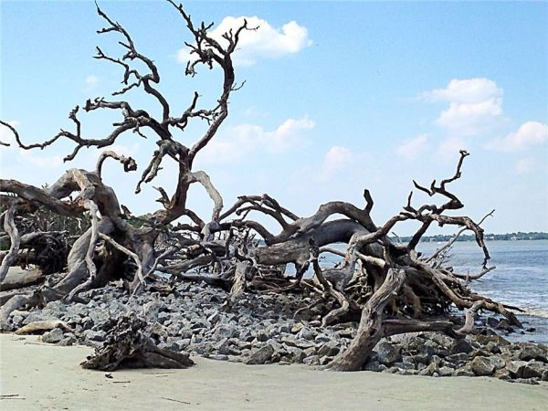 image of drfitwood on a beach