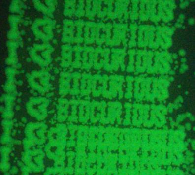 Bio-luminescence experiment [Source: BioCurious.org]