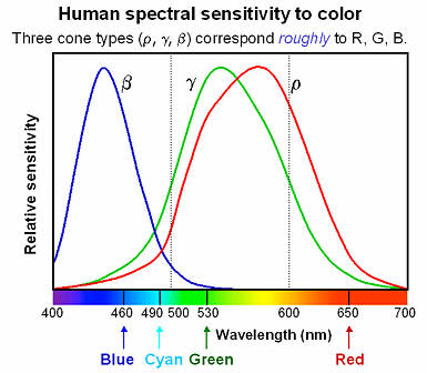 Human_spectral_sensitivity_small