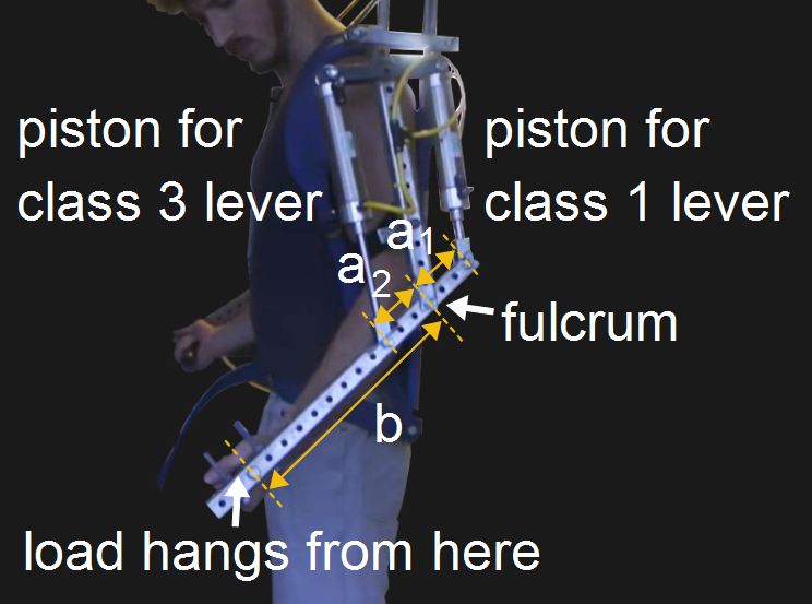 James Hobson's exoskeleton arm side with dimensions