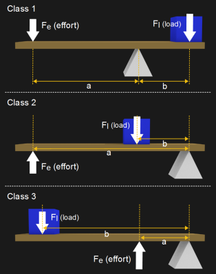 Diagrams for each of the 3 classes of levers.