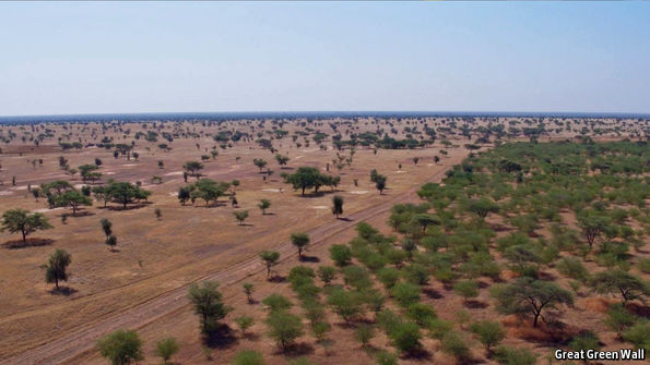 A Trillion Trees – How Hard Can It Be? | Hackaday