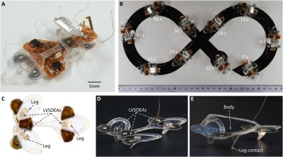 A Soft Robotic Insect That Survives The Fly Swatter