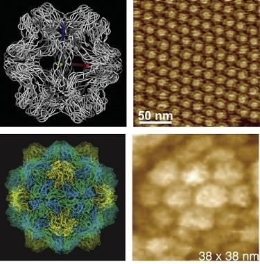 Microscopic Virus