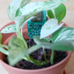 w-parasite circuit board in a potted plant