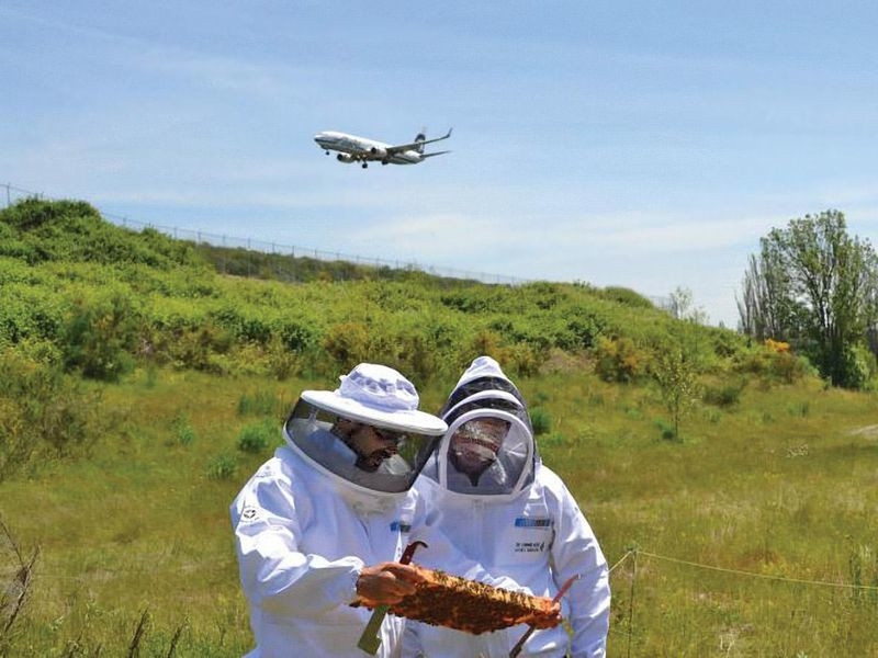 Airports Are Now AirBNBs for Honeybees