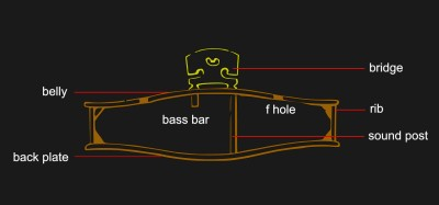 Cross-section of a violin bridge