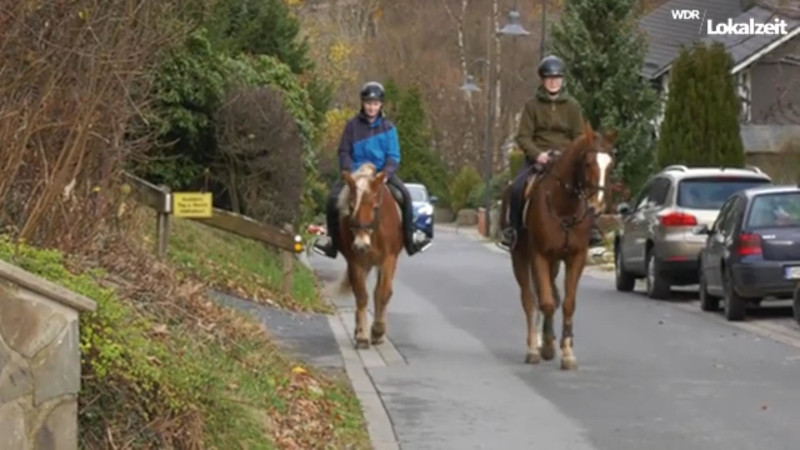 German Experiment Shows Horses Beating Local Internet Connections